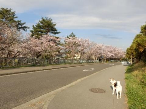 散歩 014 (480x360)
