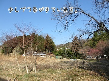 IMG_0012 (1)