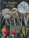 Kingdom_of_fungi_1.jpg