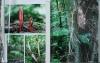Kingdom_of_fungi_4.jpg