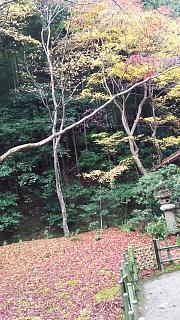 20161123祇王寺(その14)