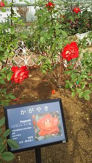 20161204芝浦中央公園(その4)