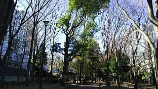 20161210戸山公園(その8)