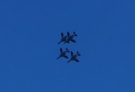 blueimpalus20170505-1a.jpg