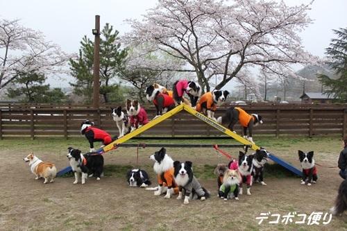 20170409 ネイチャー2