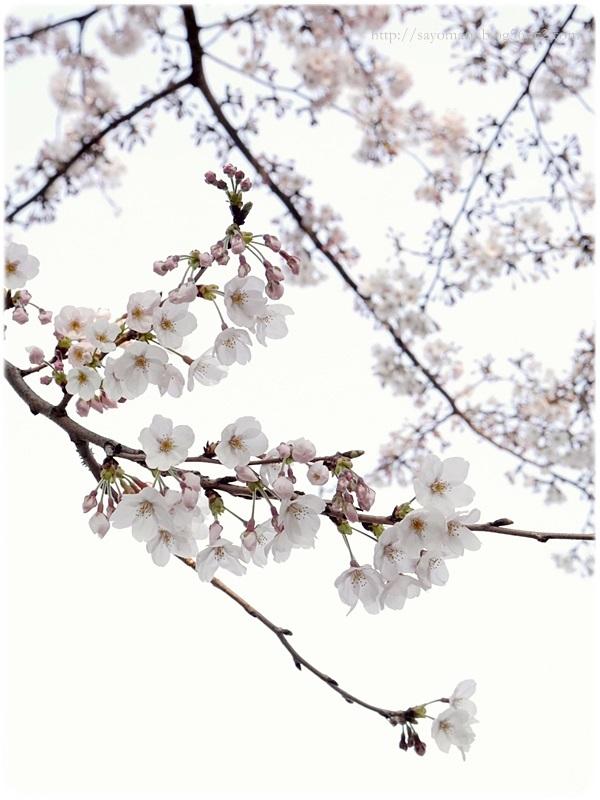 sayomaru19-949.jpg