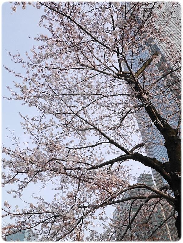 sayomaru19-954.jpg