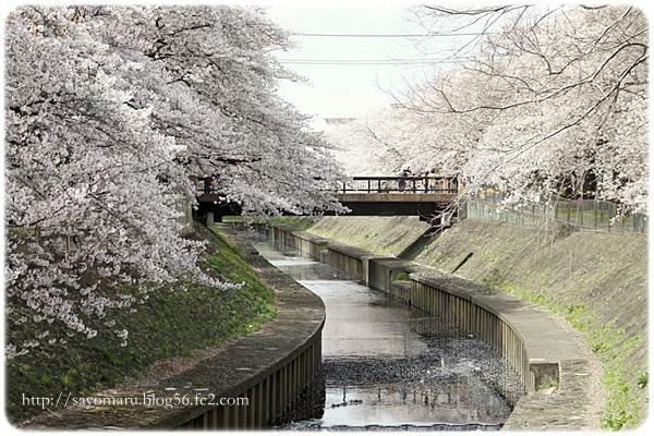 sayomaru20-66.jpg