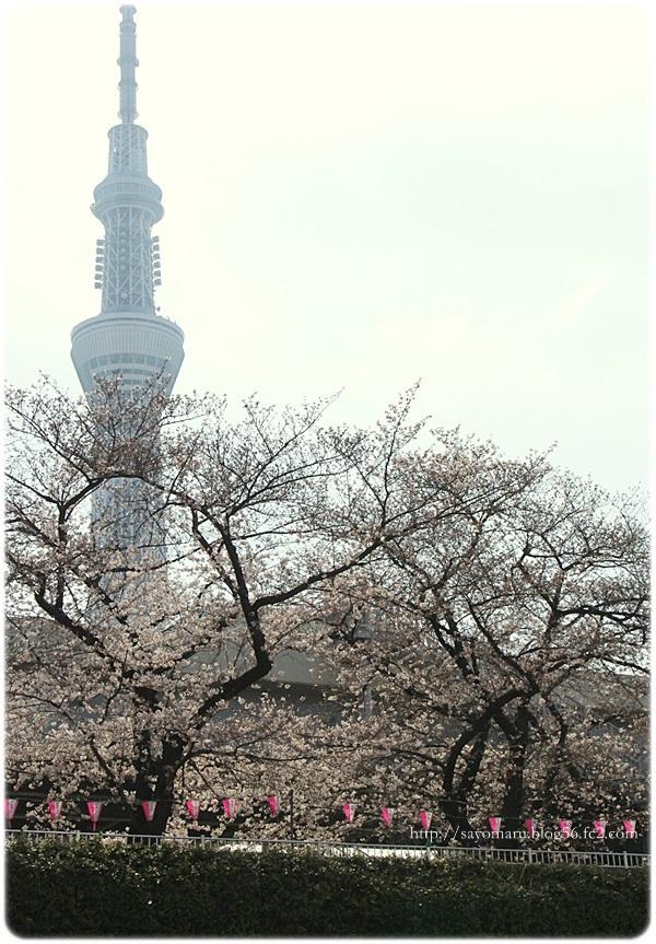 sayomaru20-75.jpg