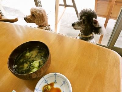 食べたい…