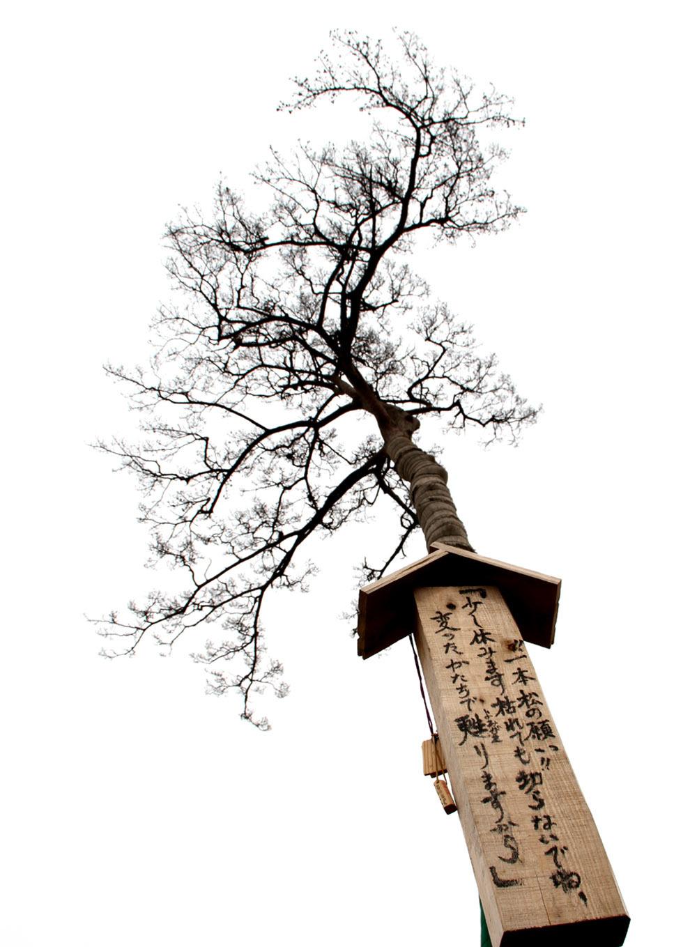 忘れまい 東日本大震災(10)