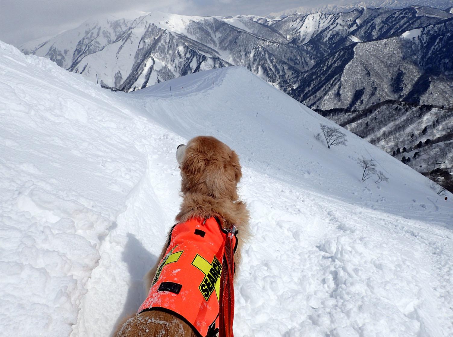 201703 雪中捜索(1)