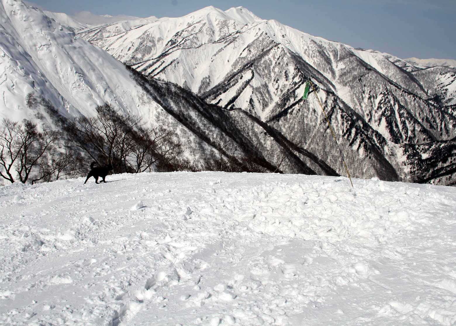 201703 雪中捜索(26)