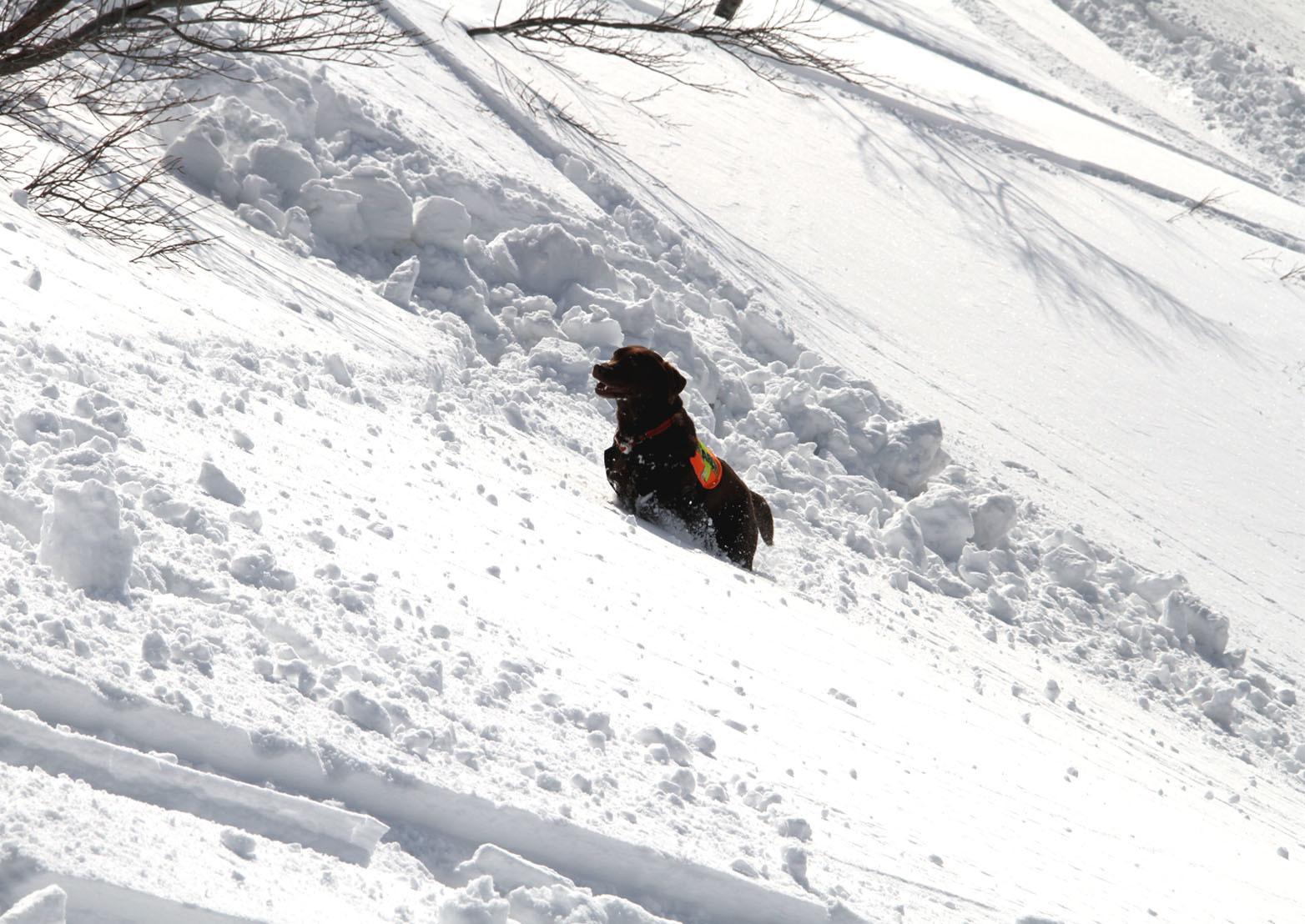 201703 雪中捜索(28)