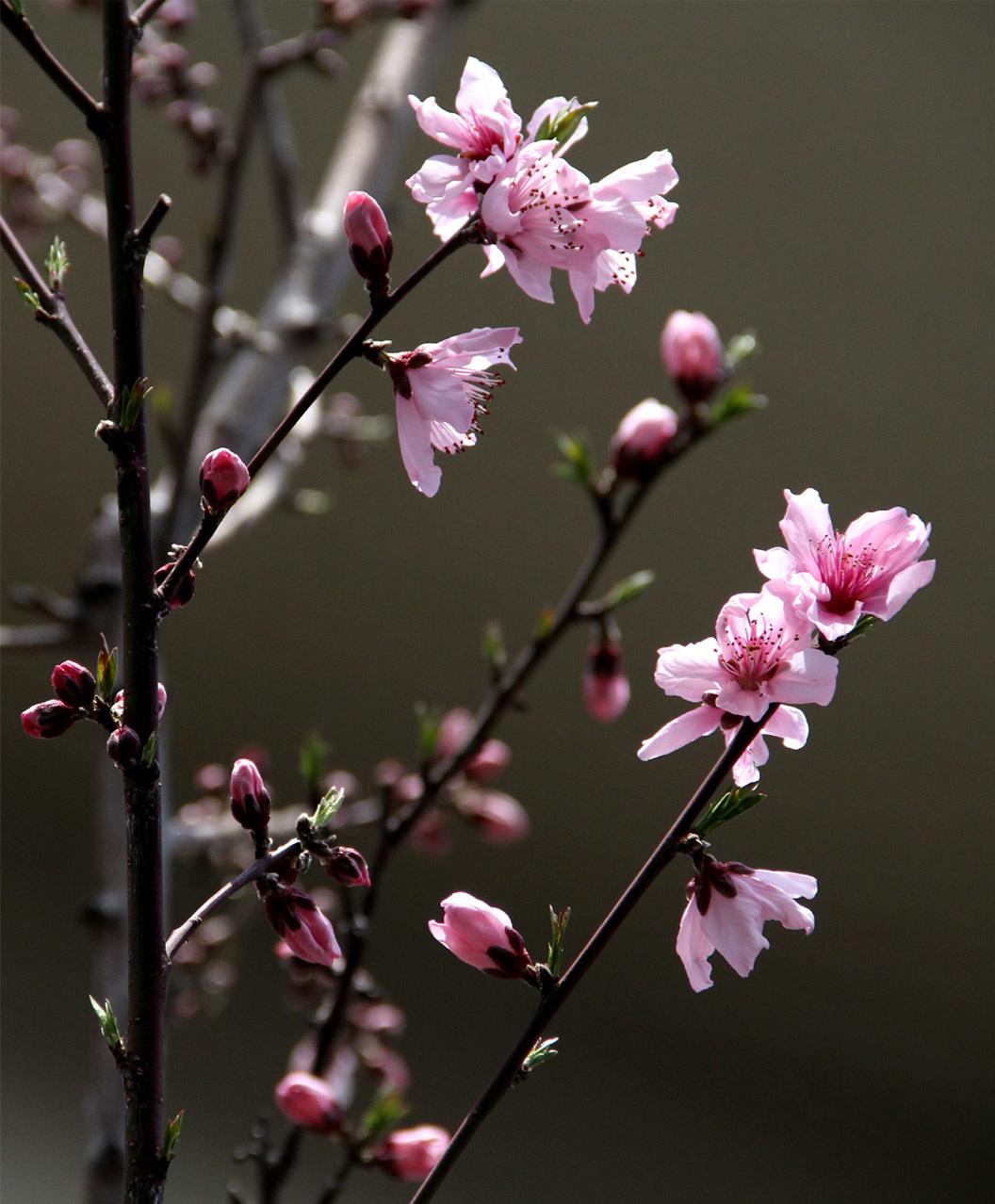 4月3日の桃とヒット(1)
