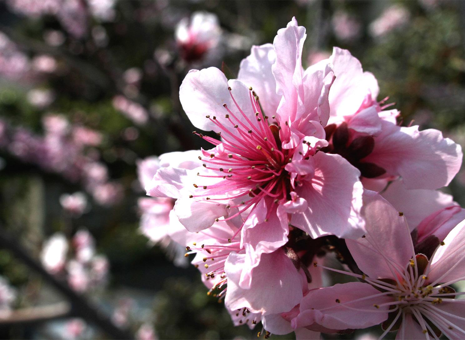 4月6日の桃とヒット(2)