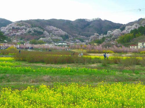 福島花見山1全景