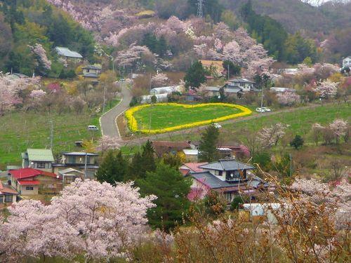 福島花見山15