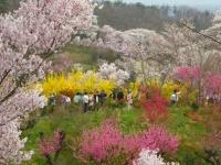 福島花見山19天の川