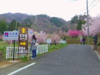 福島花見山23花の谷コース