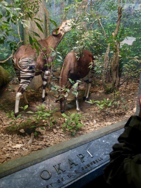 自然史博物館 - 1 (2)