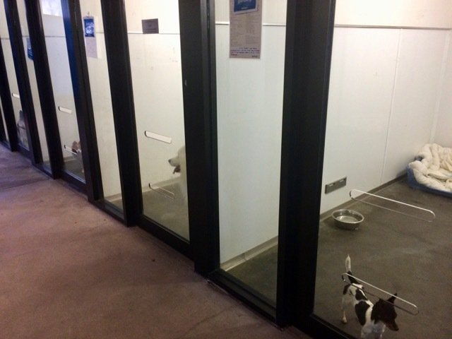 rspca-vic--dog rooms