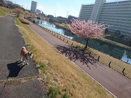 17-03-09_936.jpg