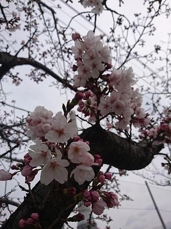 17-03-29_1018.jpg