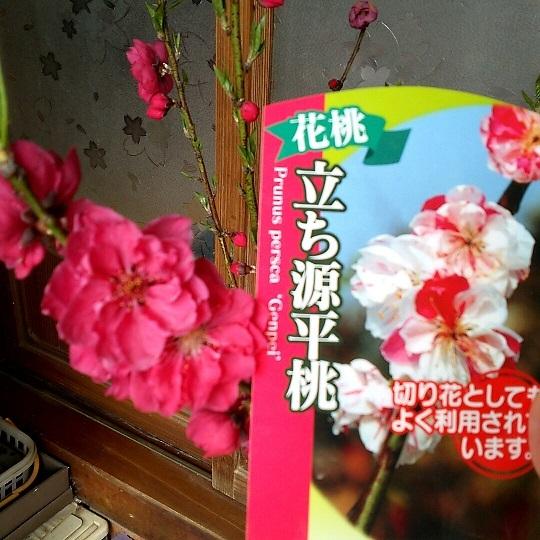20170413源平桃比較