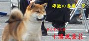 fuukun_bn3_yasukaze_20170331001511f3a.jpg