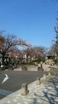 荒川区役所・荒川公園の桜2017年4月3日その5