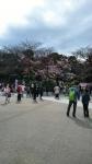 20170324上野公園の桜3
