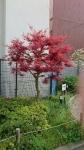 春の木々その1