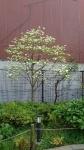 春の木々その3