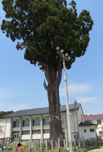 弓削八幡宮社の御神木