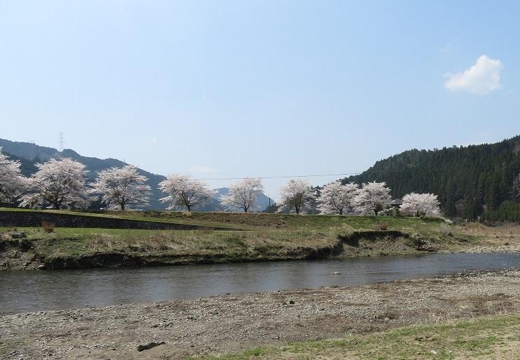 栃本の百本桜