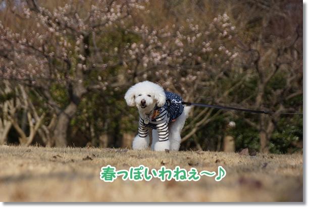 森のお散歩3