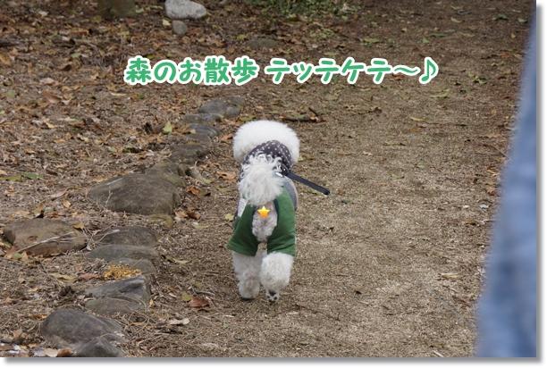 ご機嫌な散歩♪1