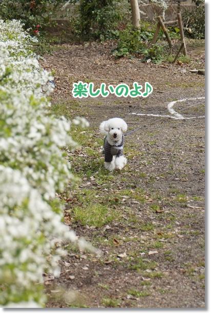 ご機嫌な散歩♪2