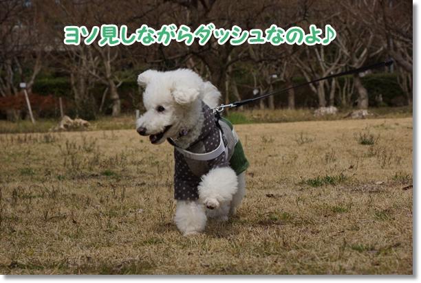 ご機嫌な散歩♪5