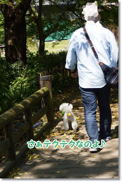 八重桜 満開♪7