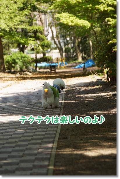 八重桜 満開♪8