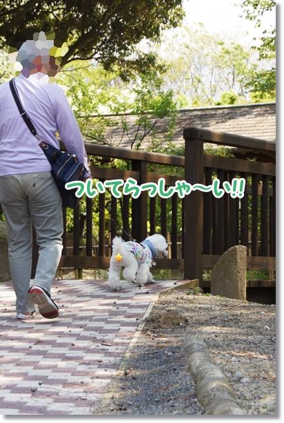 森 散歩1