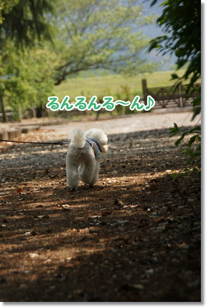 森 散歩2