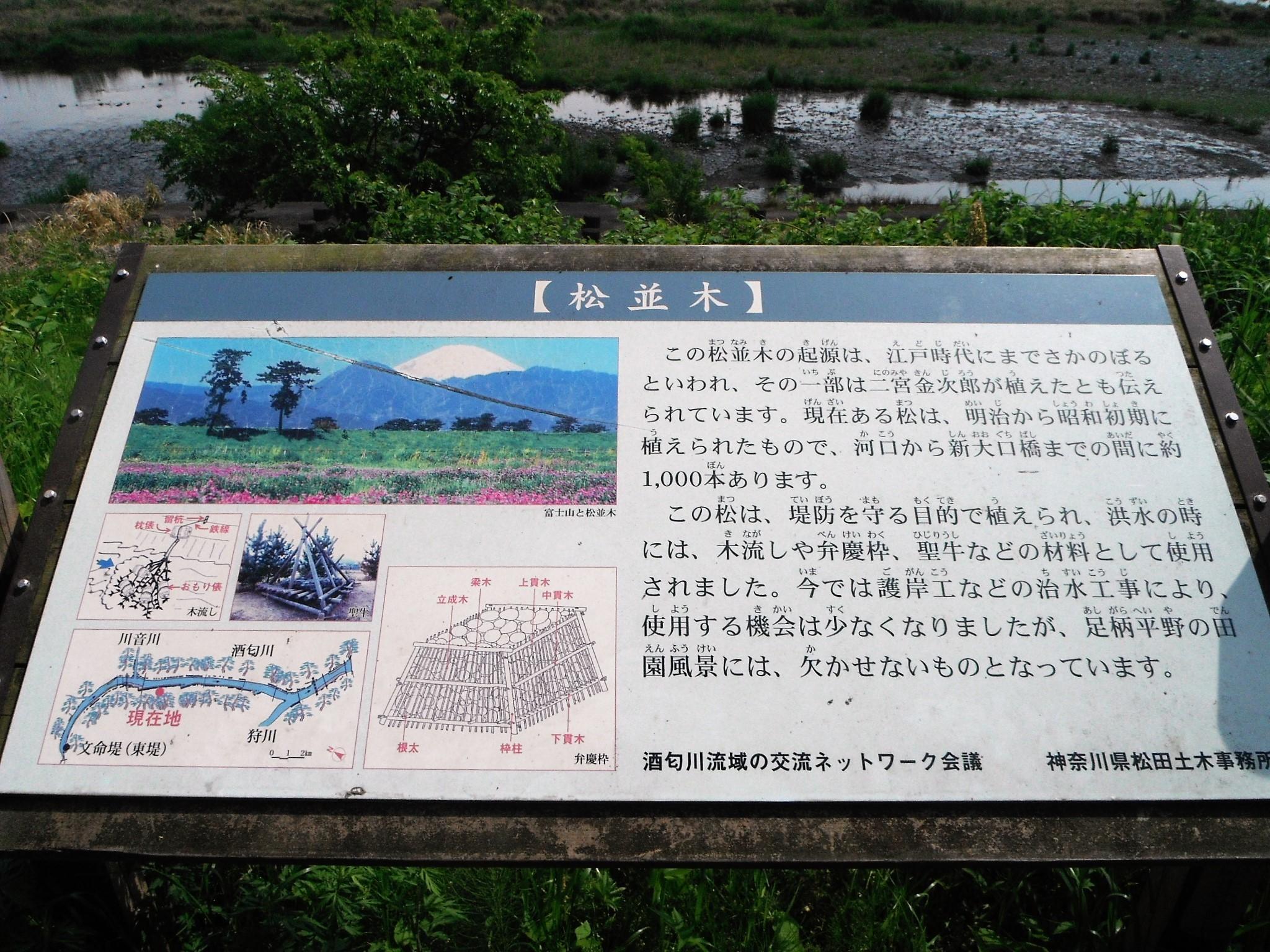 酒匂川サイクリングコース5