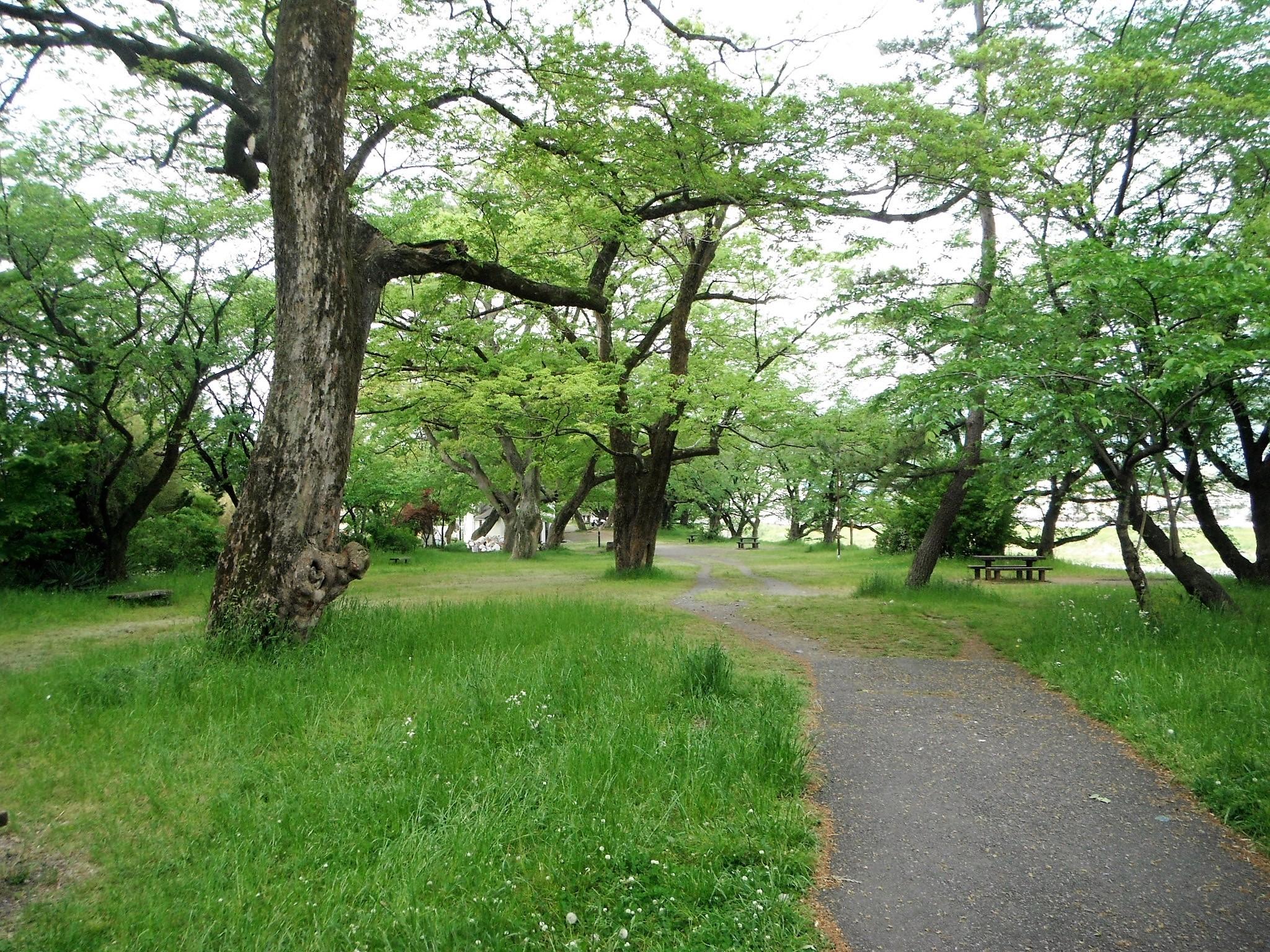 酒匂川サイクリングコース12