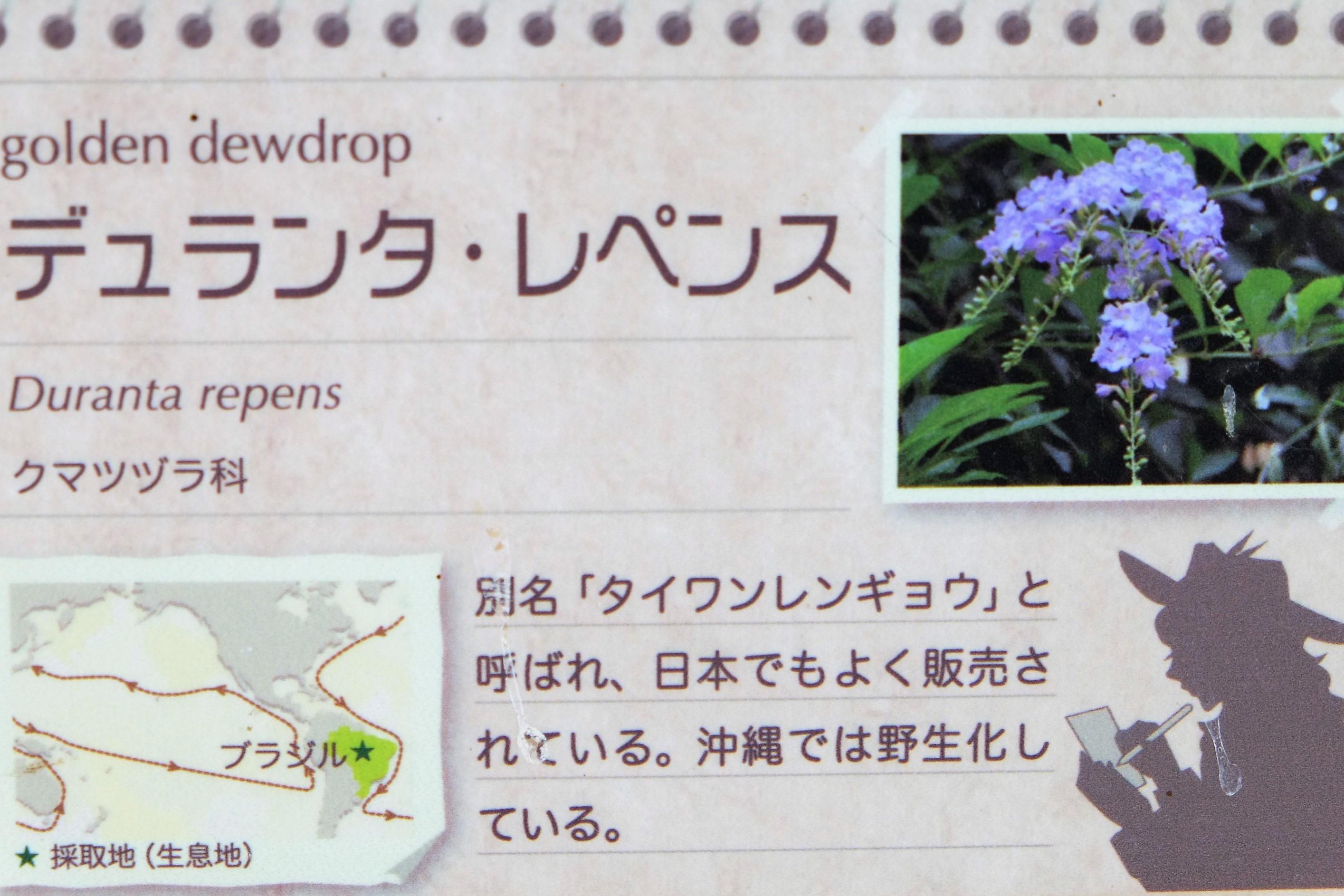 小田原フラワーガーデン1