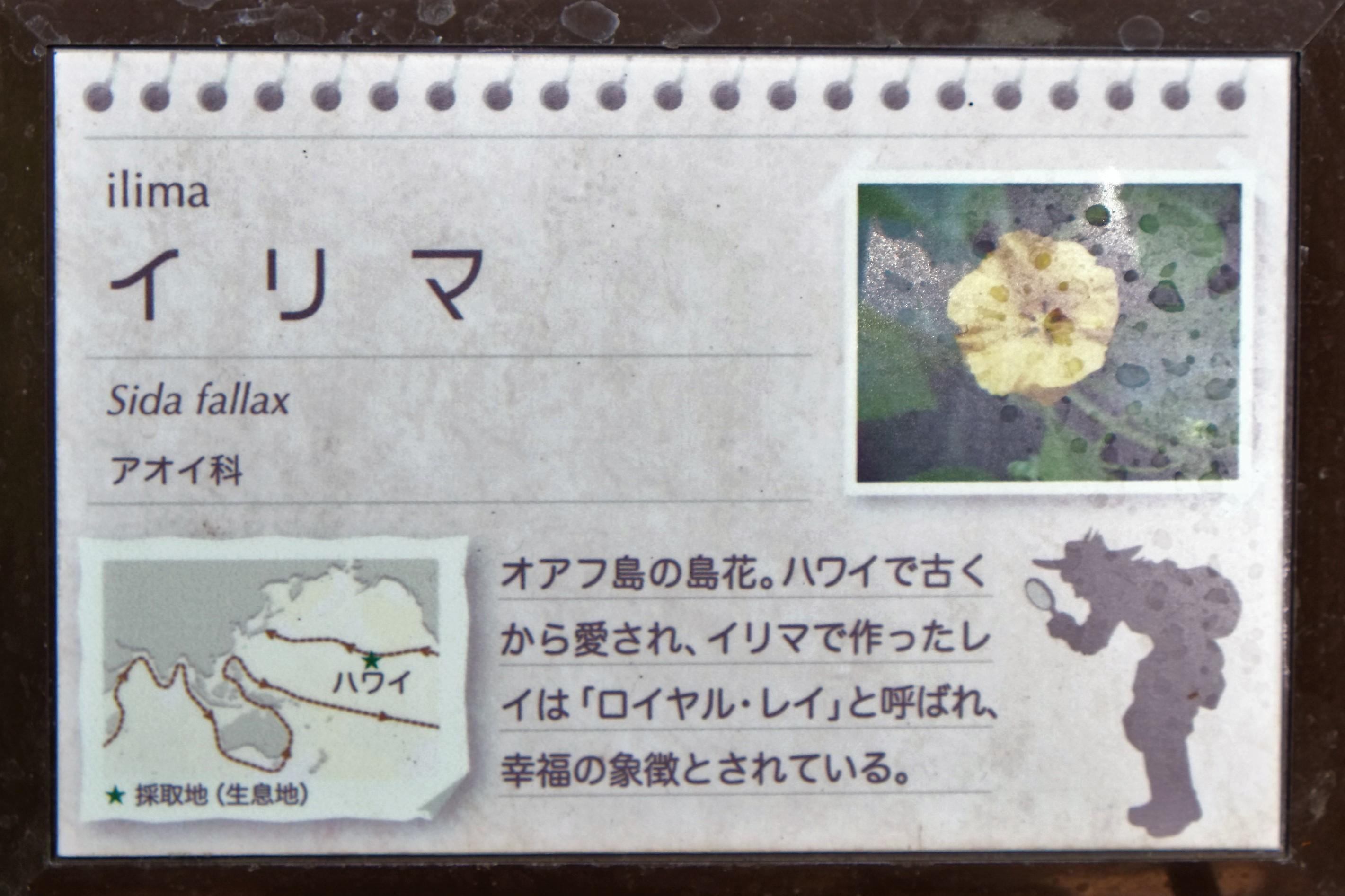 小田原フラワーガーデン3