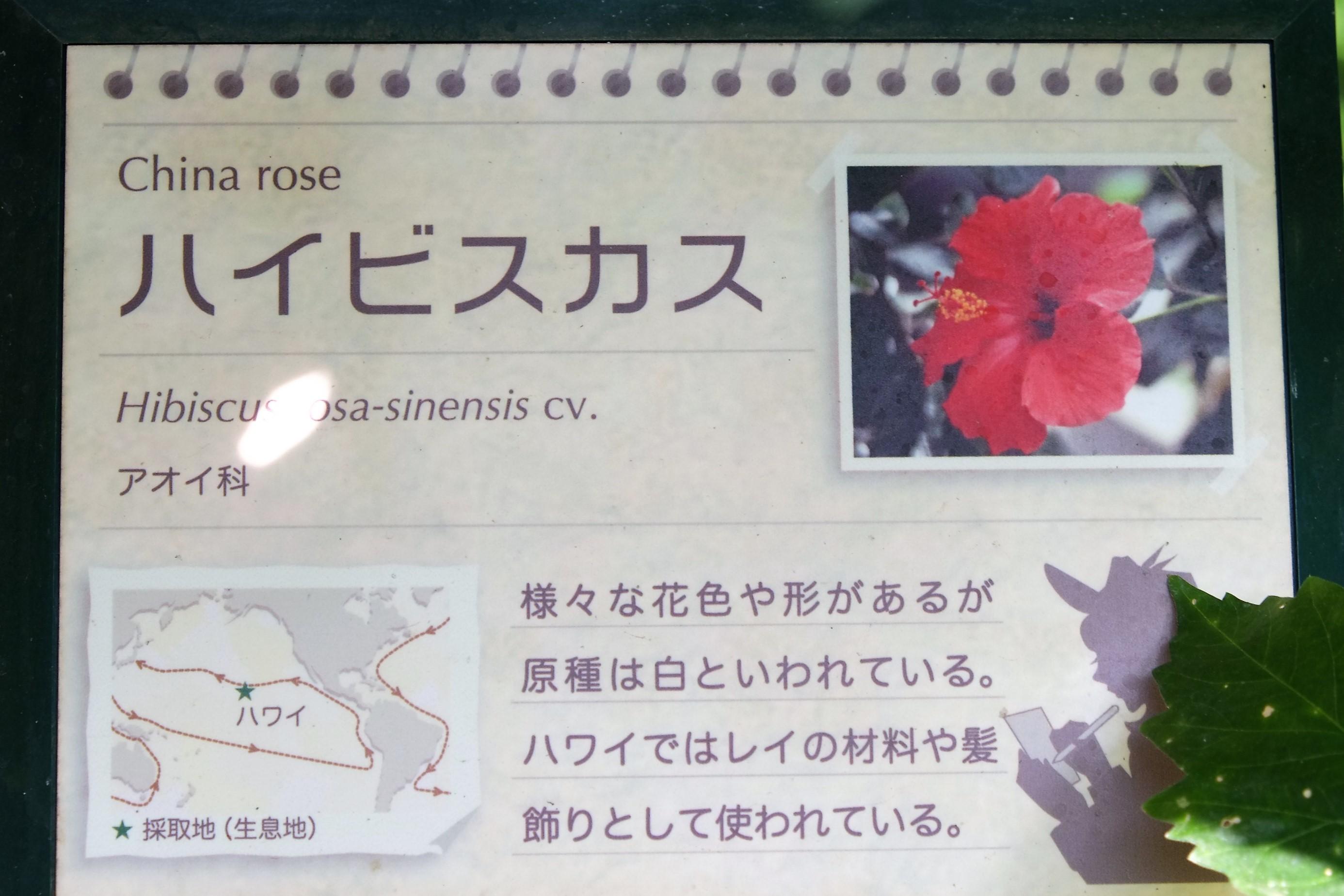 小田原フラワーガーデン5