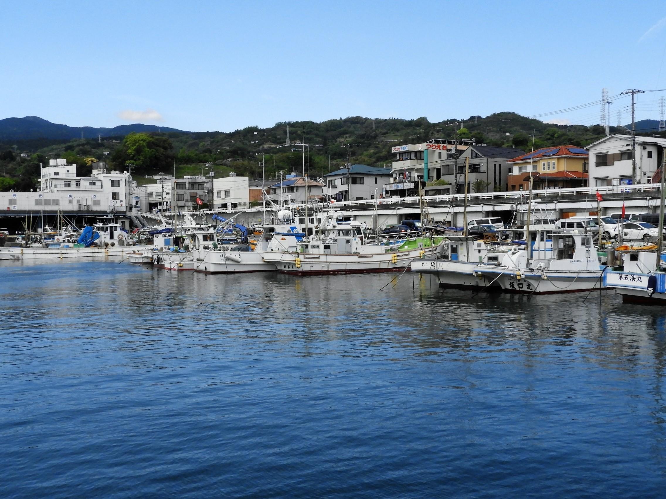 小田原漁港6